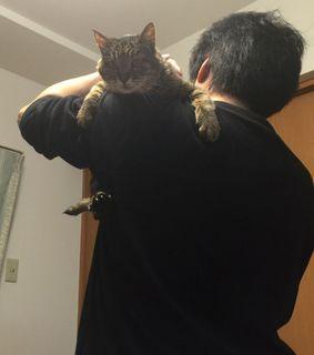 ウチの猫 (2).JPG