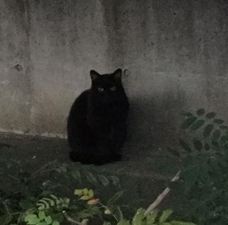 クロ猫.JPG