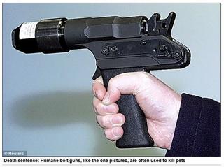 人道的な銃.JPG
