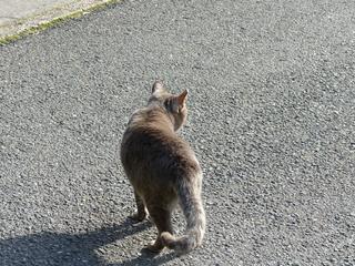 猫�B1.jpg